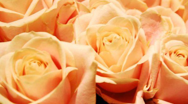losse rozen